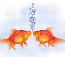 Goldfish Couple